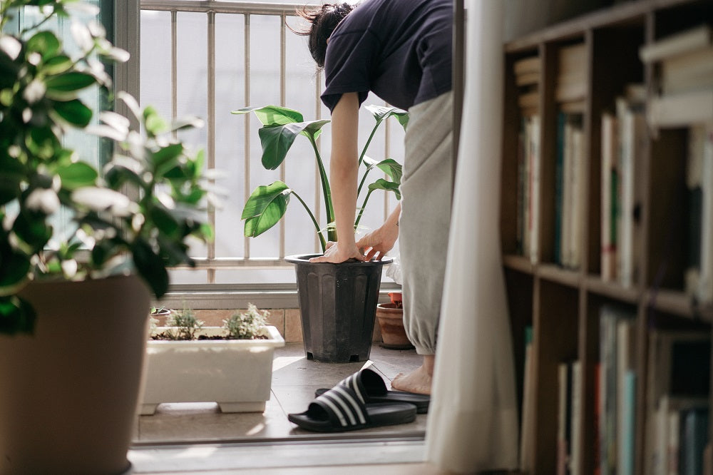 Man tending to houseplants at his home.