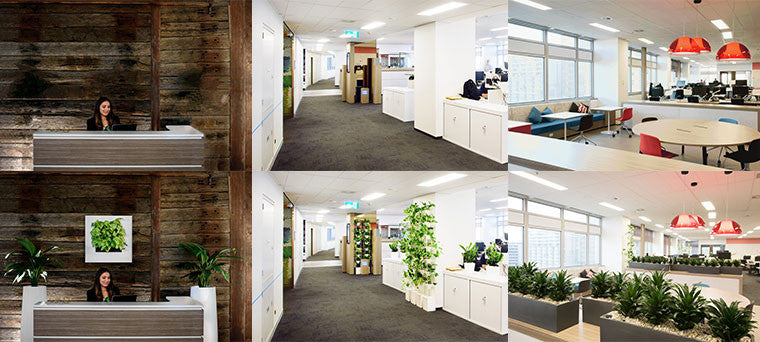 And While Even One Succulent Is A Step In The Right Direction, Why Not Take  It A Step Further And Update The Interior Of Your Home Or Office Space With  Some ...