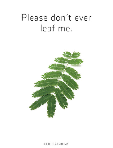 14 Valentine's Cards Rocking Plant Puns For Any Mood – Click
