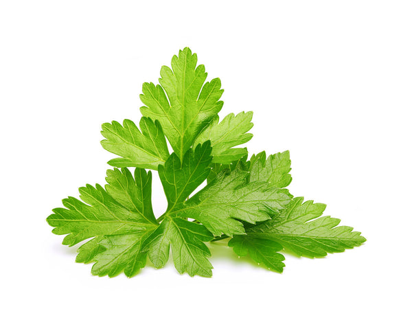 Cilantro - Grow superfood at home. Click & Grow indoor gardens. Cilantro health benefits.