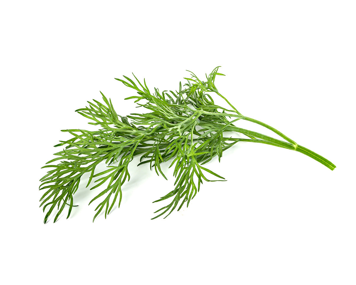 DILL PLANT PODS