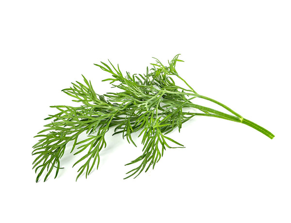 Dill capsule - Click & Grow indoor garden - grow dill (Anethum graveolens) at home