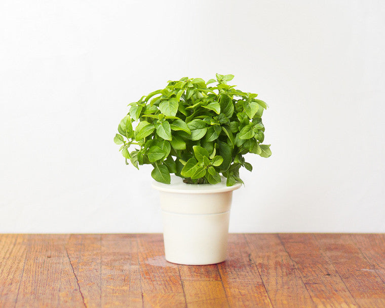 Italian Pesto Mix -  Click & Grow indoor gardens