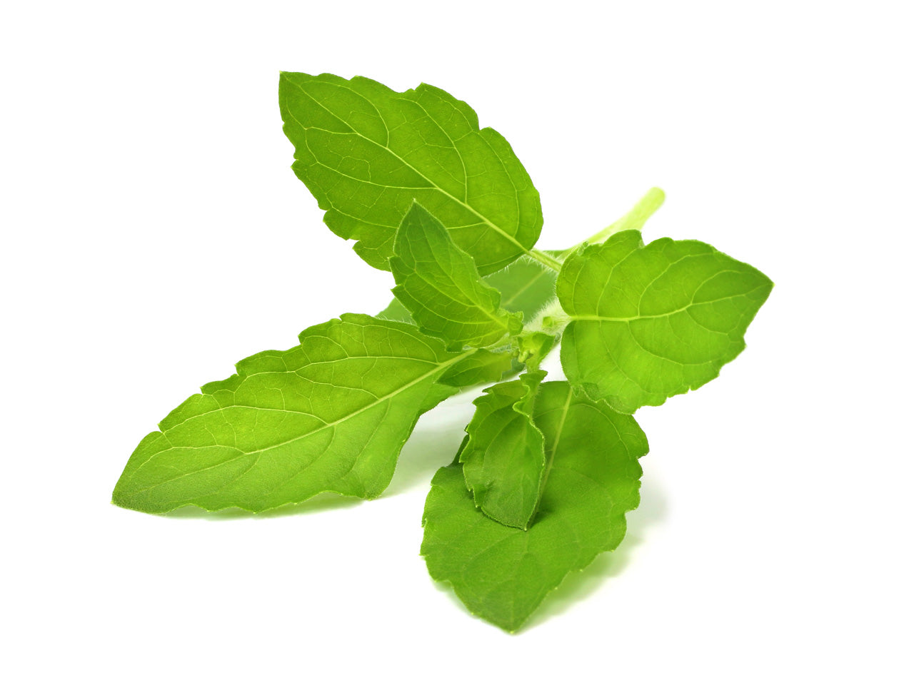 Holy Basil Tulsi Plant Pods for Click & Grow Indoor Herb Gardens