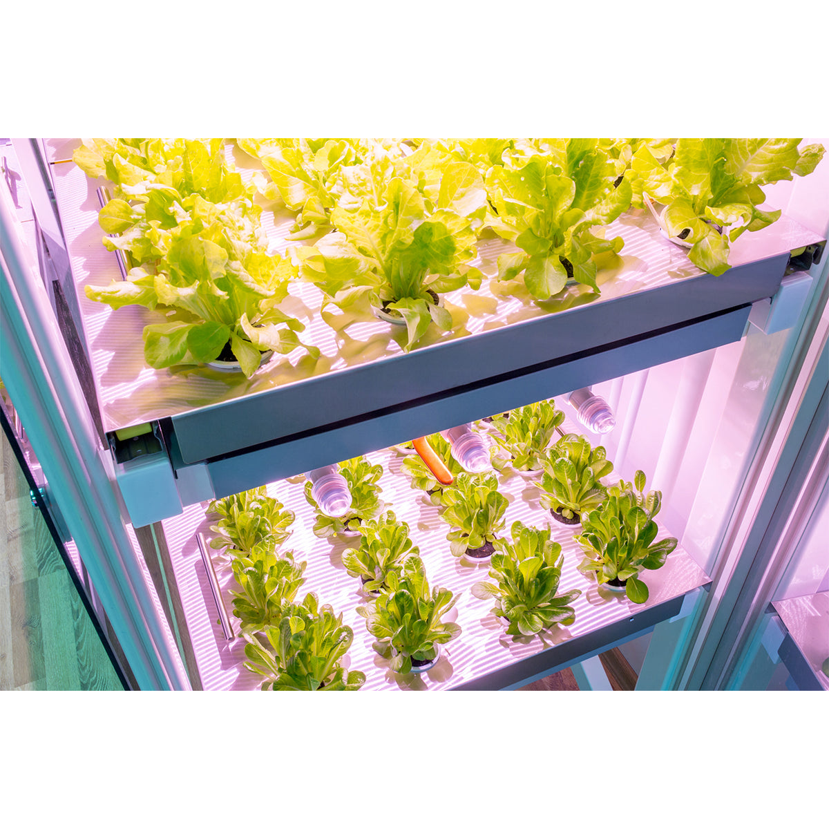 Smart Farm indoor plant growing system | Click & Grow