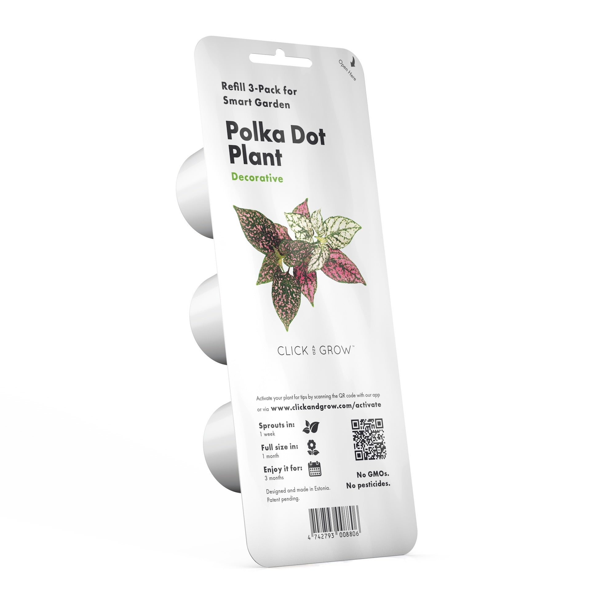 Polka dot flower plant pods click grow polka dot flower hypoestes phyllostachya capsule click grow izmirmasajfo