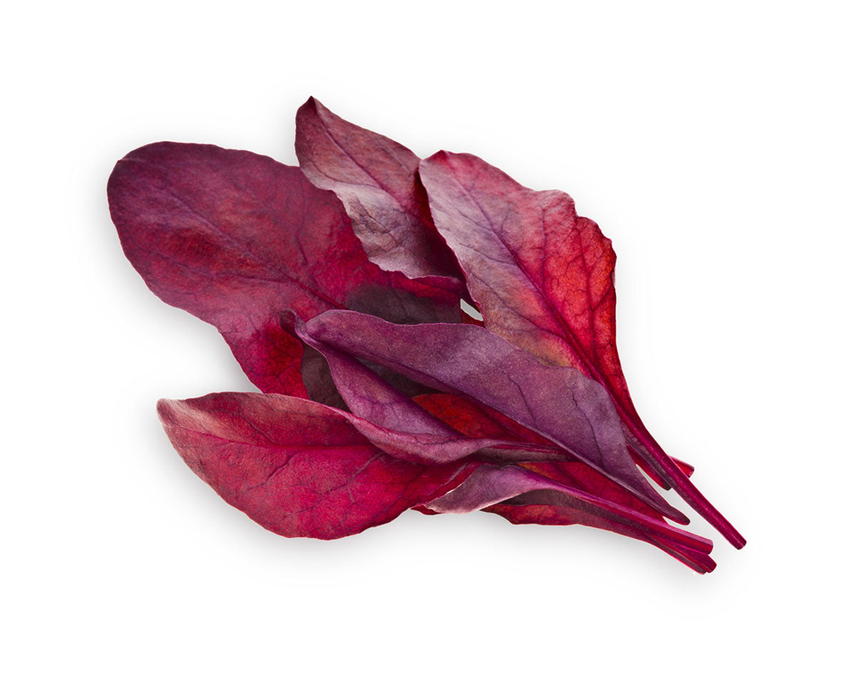 Grow red leaf beet at home. Click & Grow smart gardens. Grow food with Click and Grow.