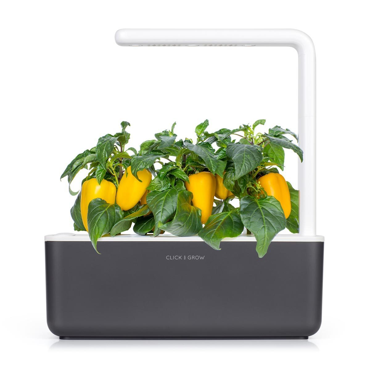 Yellow Sweet Pepper 9-pack