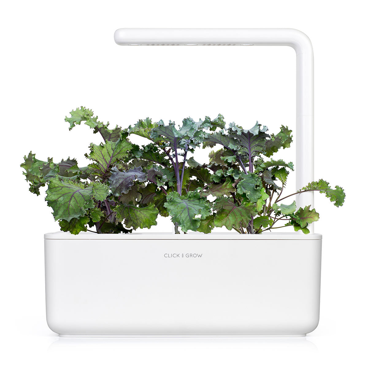 Red Kale capsule - Click & Grow indoor garden