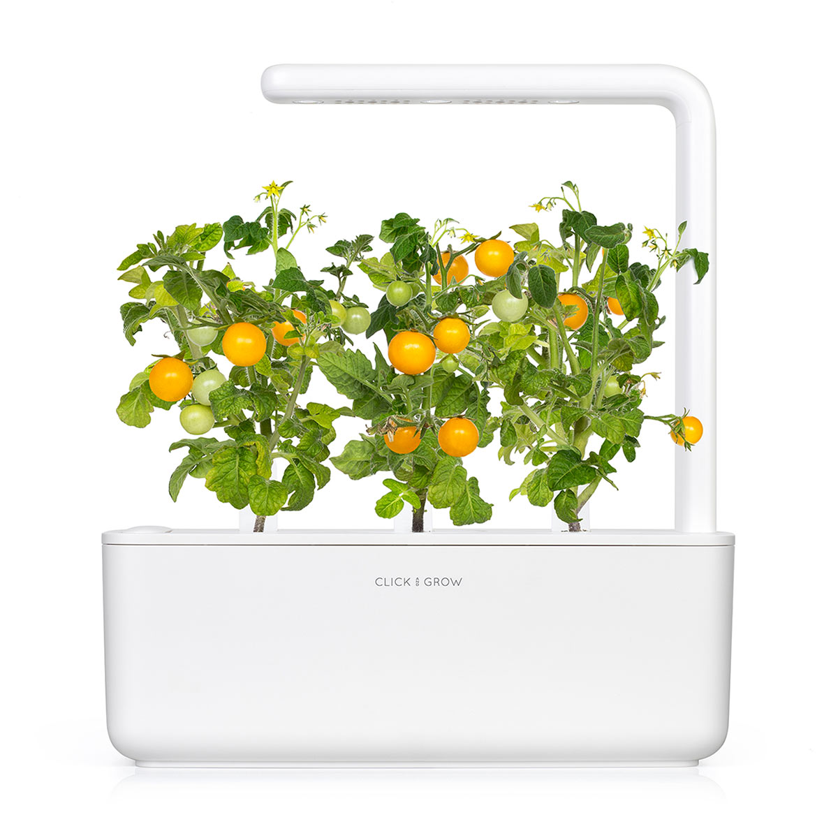 Yellow Mini Tomato Plant Pods Click Grow