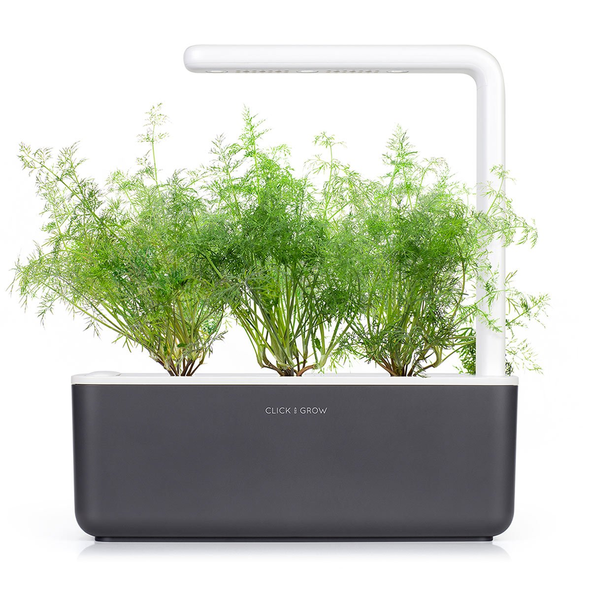 Dill capsule - Click & Grow indoor garden - grow dill at home