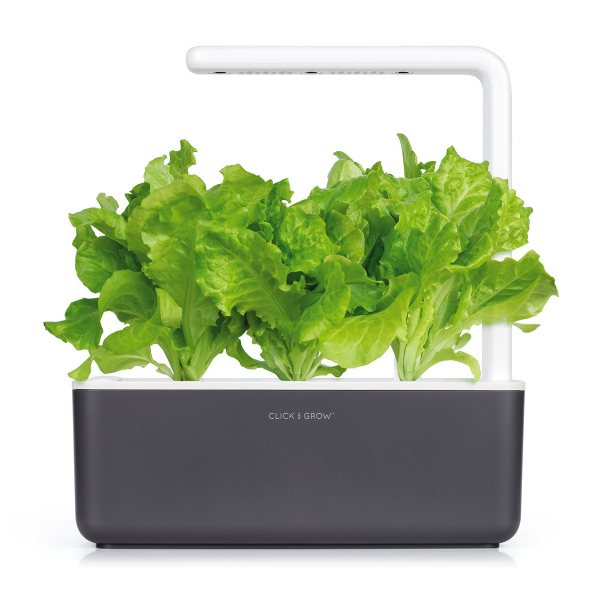 Grow lettuce indoors with an Indoor Herb Garden. Click & Grow