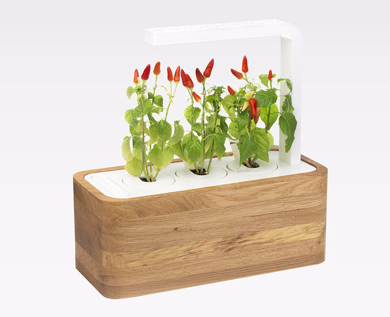 Click & Grow indoor herb garden in a wooden white oak case