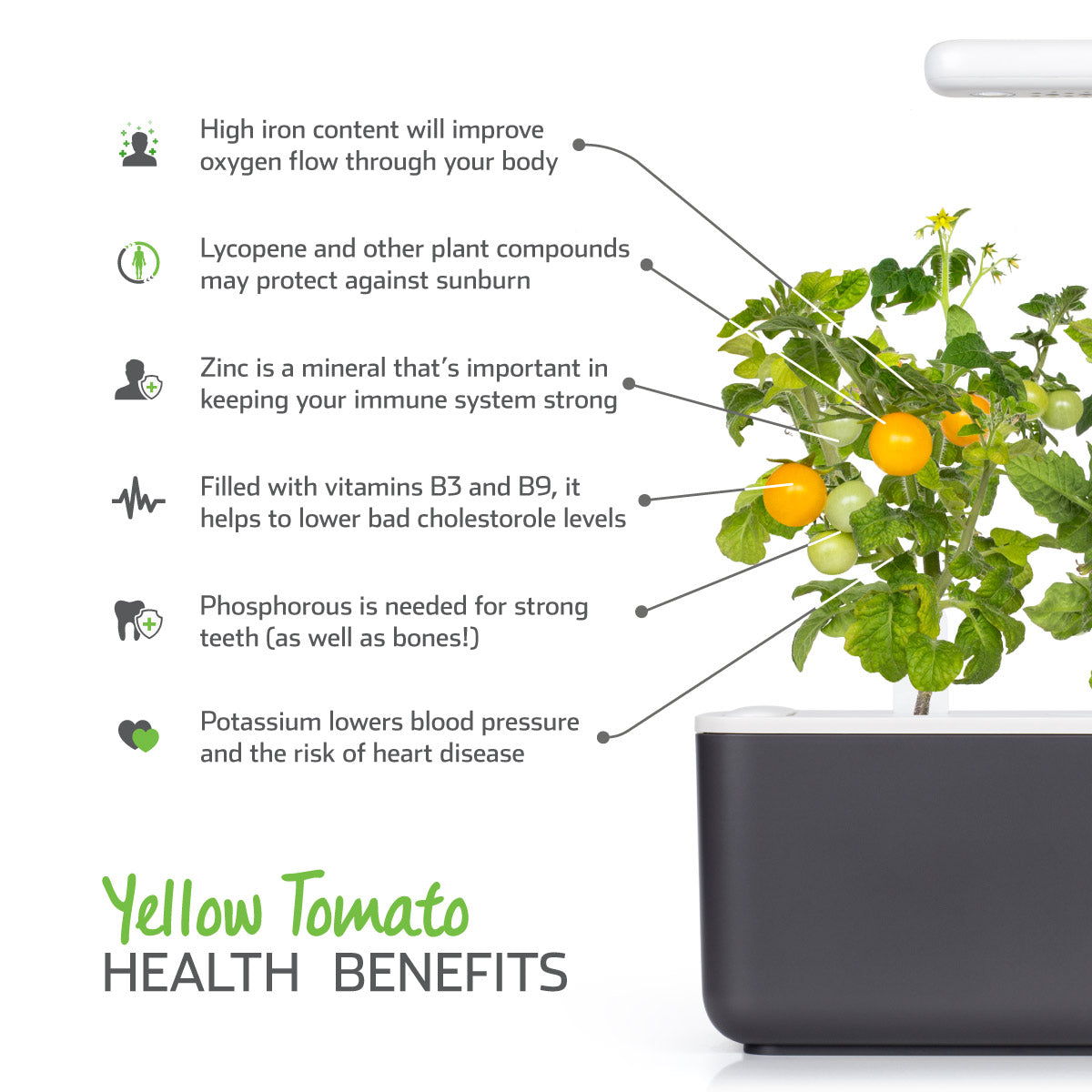 Health benefits of yellow tomatoes (Lycopersicon esculentum). Click & Grow.