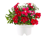 China Pink Refill for Smart flowerbed