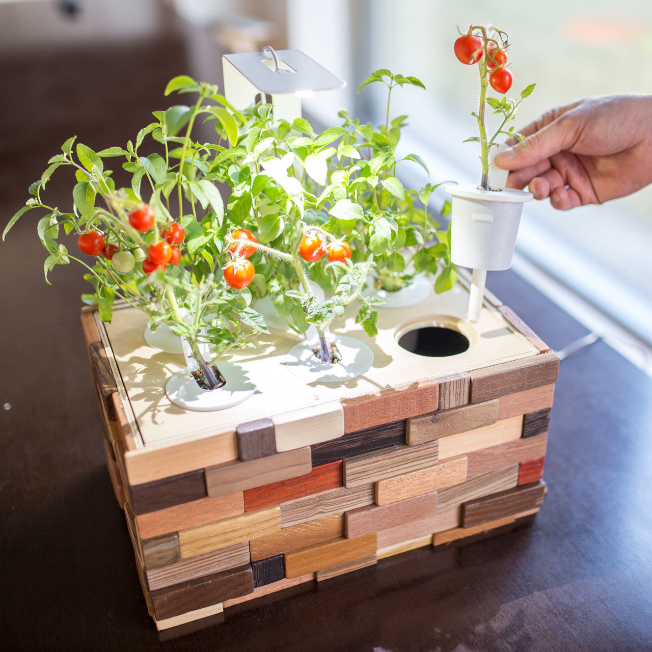 Diy indoor garden kit click grow for Indoor gardening kit