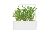 Marjoram - Grow superfood at home. Click & Grow indoor gardens