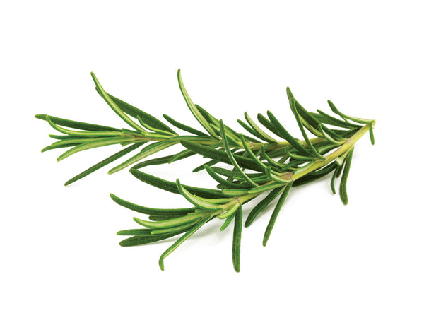 Growing rosemary using Click & Grow's indoor garden. Cooking with Rosemary and Rosemary Oil Benefits.