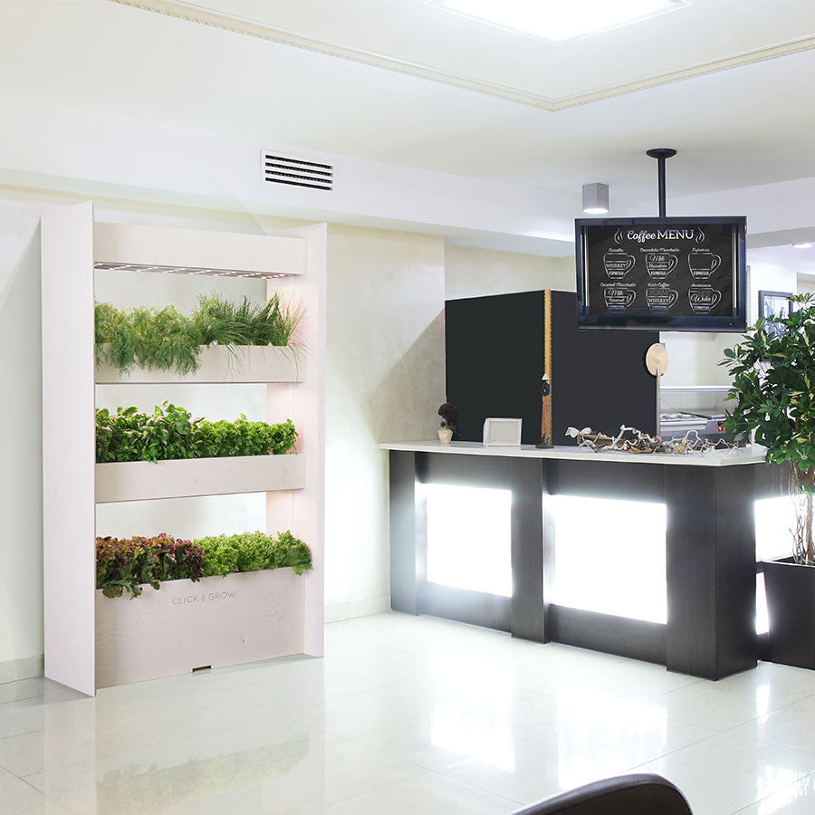 Wall Farm is an indoor vertical garden that grows fresh plants all year round.