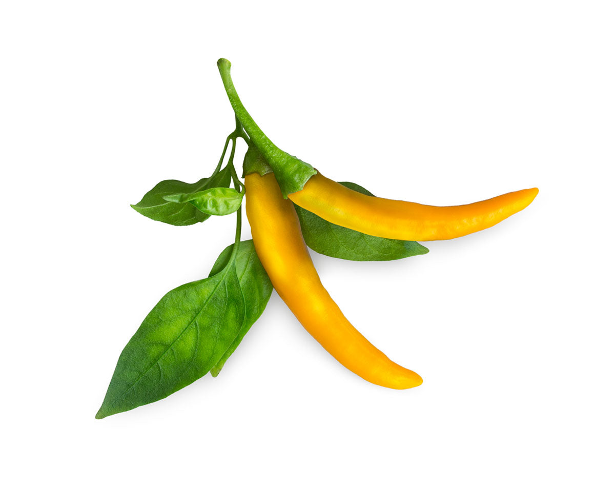 Yellow Chili Pepper 9-pack