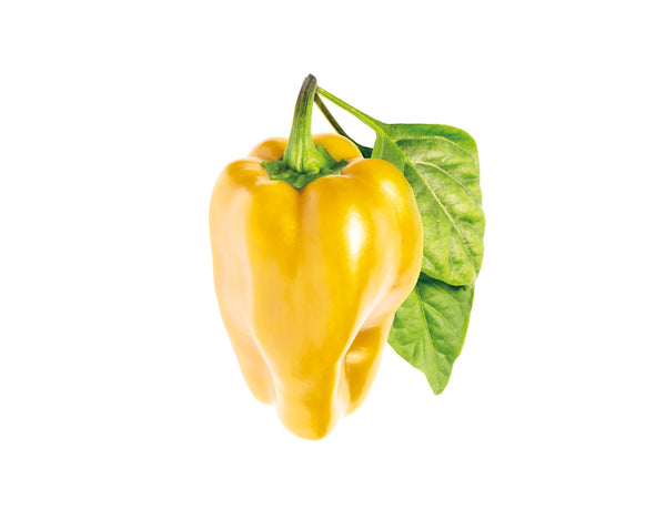 Yellow Sweet Pepper Refill (Capsicum annuum) - Click & Grow indoor garden