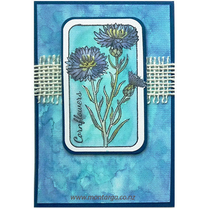 Watercolour Cornflowers