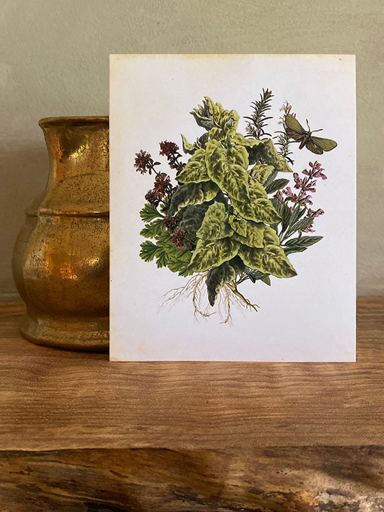 Apothecary Note Card