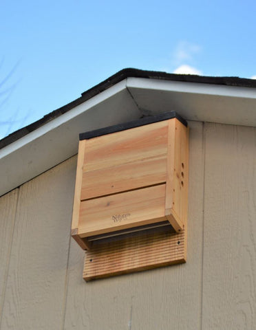 Celebrate Earth Day This Year By Installing a Bat House!