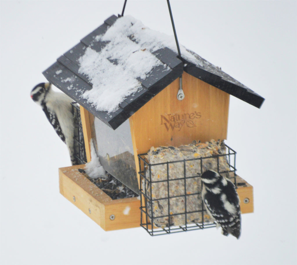 A Beginner's Guide to Suet