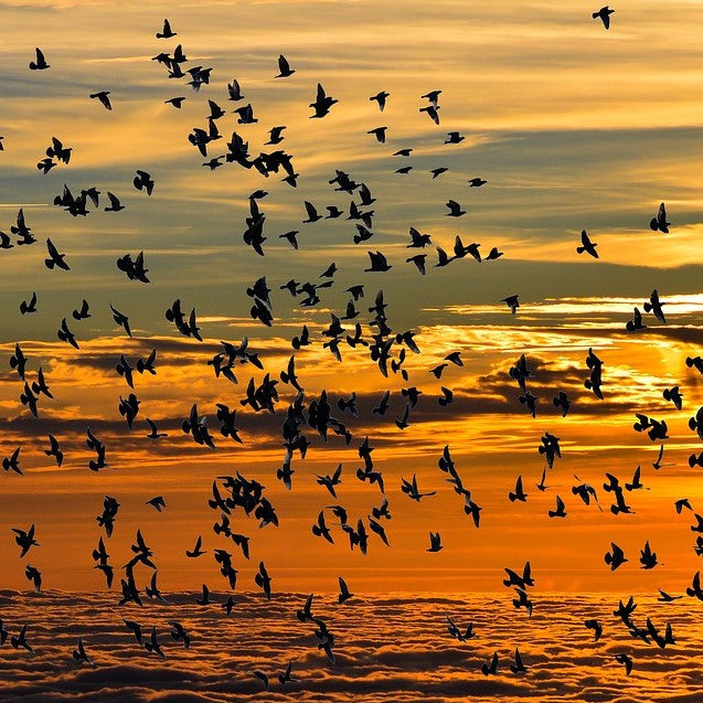 Light Pollution: How to Help Migrating Birds