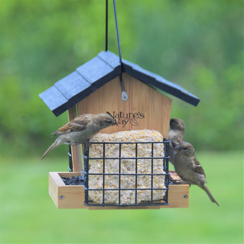 Bamboo Bird Feeders