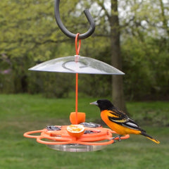 Male Baltimore Oriole on nectar feeder
