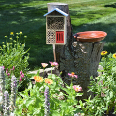beneficial insect house