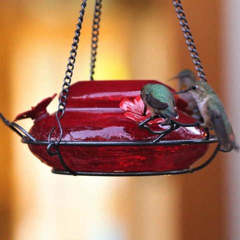 three hummingbirds feeding from the nature's way Modern Hummingbird Feeder - Solid Red