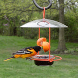 oriole feeding from orange on the Nature's Way Wire Oriole Feeder