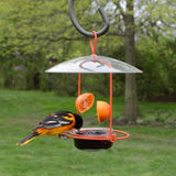 oriole feeding from jelly on the Nature's Way Wire Oriole Feeder