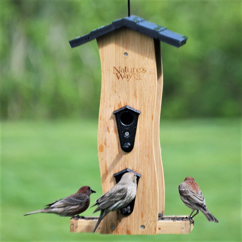 Multiple birds feeding from Nature's Way bamboo Vertical Wave bird Feeder
