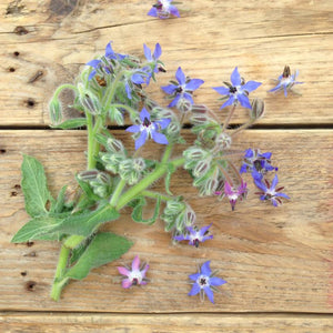 Borage Flower Mix Seeds