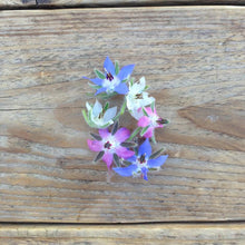 Load image into Gallery viewer, Borage Flower Mix Seeds