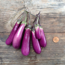 Load image into Gallery viewer, Eggplant Slim Jim Seeds
