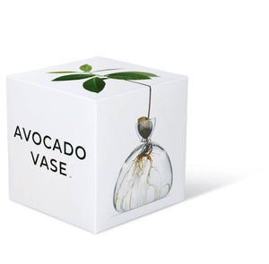 Avocado Vase by Ilex Studio
