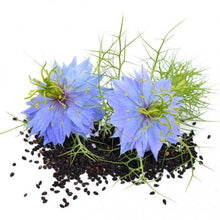 Load image into Gallery viewer, Nigella Black Cumin Seeds