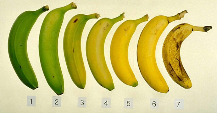 Health benefits of different kinds of bananas