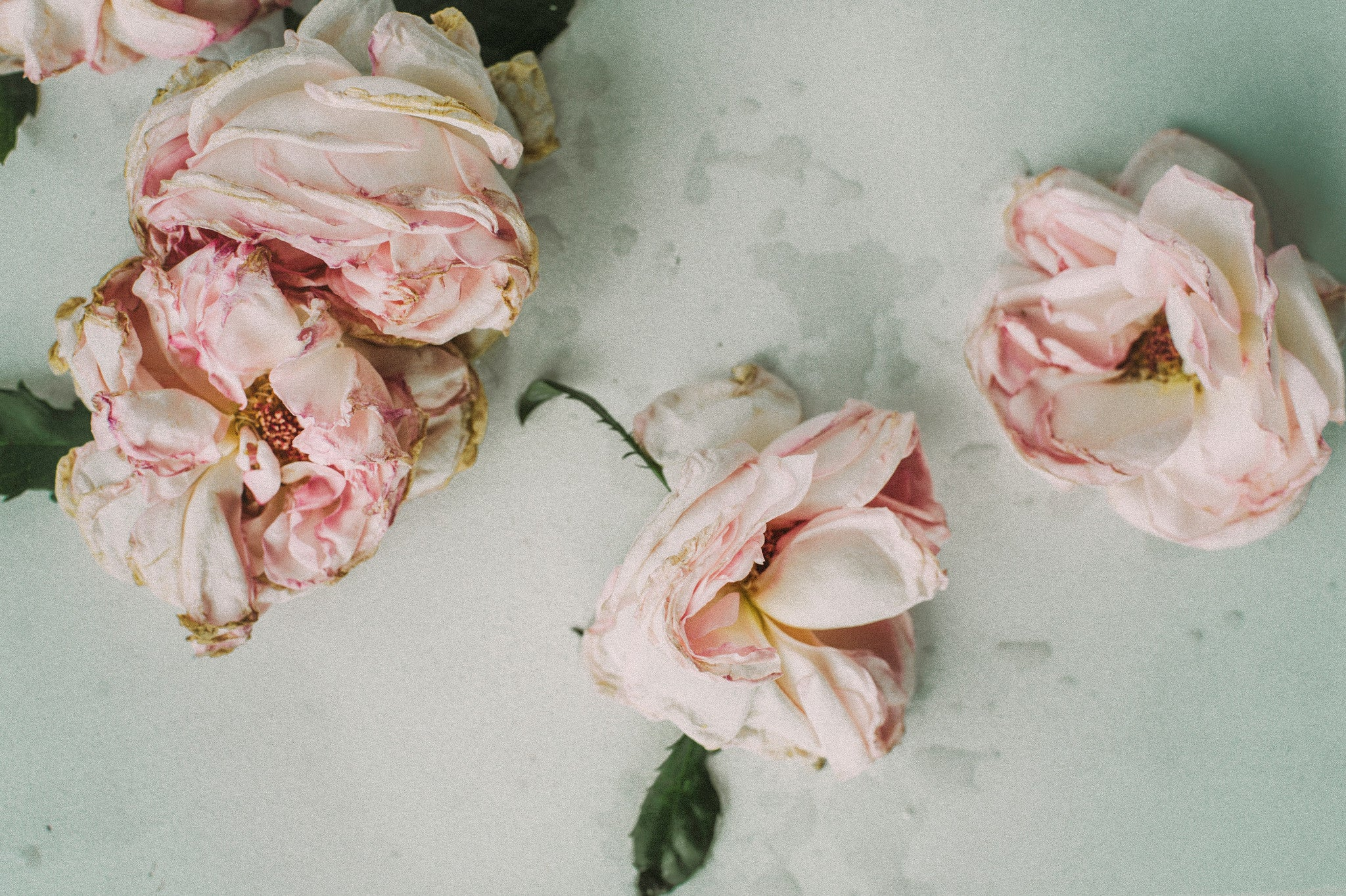 Ingredient Spotlight: Rosewater Benefits in Skin Care