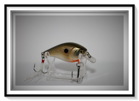 TENNESSEE SHAD 1.5 SQUARE BILL