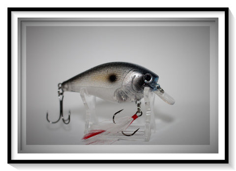 GIZZARD SHAD 2.5 SQUARE BILL