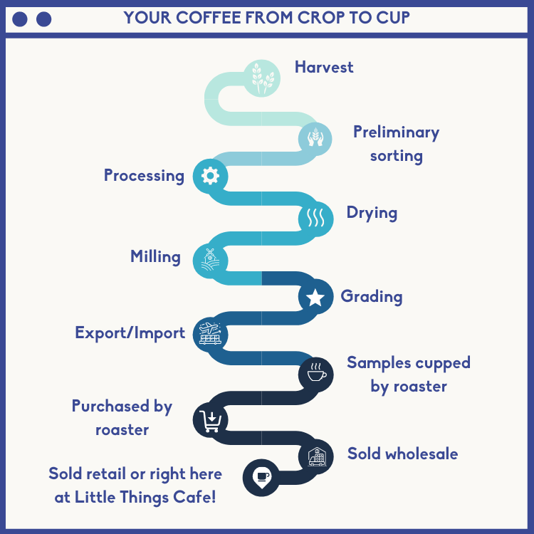 specialty coffee process crop to cup