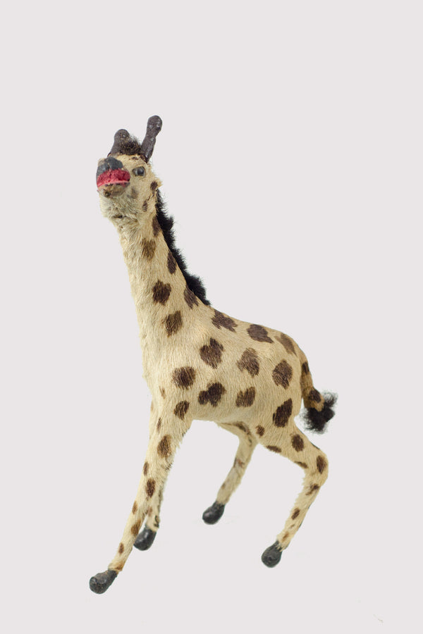 Miniature Taxidermy Giraffe