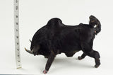 Miniature Taxidermy Bull Sr.