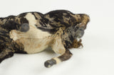 Miniature Taxidermy Bull III